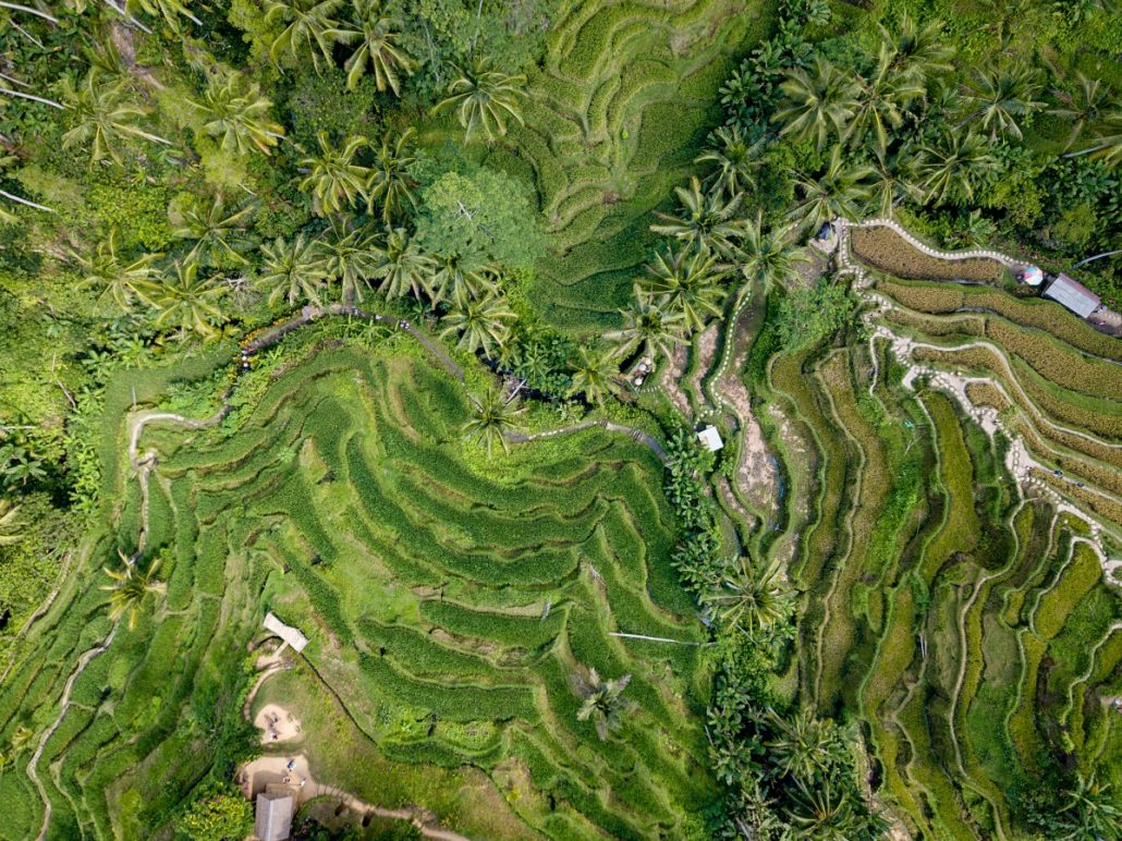Aerial view of green rice terraces.
